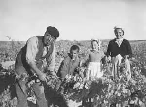 Pesquera oogst